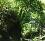 Mayfield River Walk Falls MCT