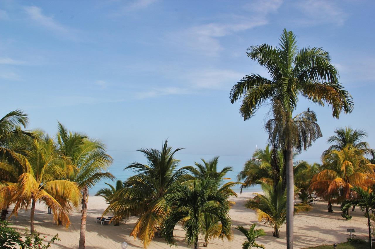 Jamaica Coconut Trees Chester Tours Experience Jamaica
