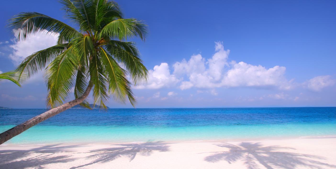 Wallpaper Caribbean Sea Beach Sunset Palm Trees Hd 5k: Visit Jamaica, Chester Tours Jamaica
